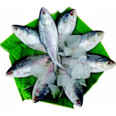Hilsha Fish(2 Pc)