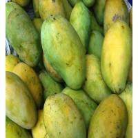 5 KG Mango in a basket