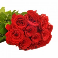 Ravishing Romance