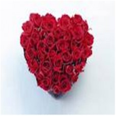 40 Red Roses gift on valentine day