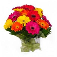 Mixed Coloured Gerbera Bouquet