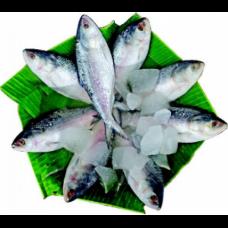 Hilsha Fish(2 Pc)
